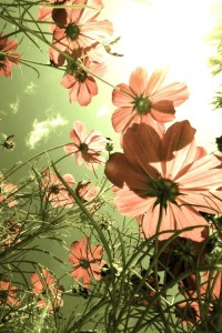 La Flor y el Viento